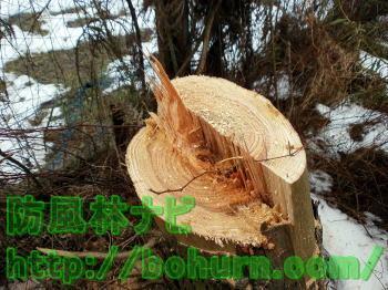 チェンソーを用いた伐採方法