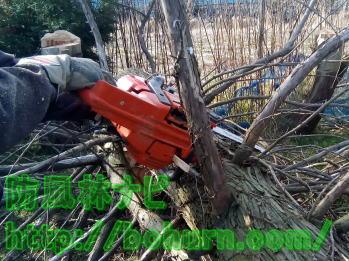 伐採により倒木した木の処理方法